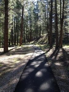 Tucker in the pine forest, UT
