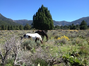 hobbled grazing in UT