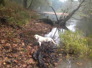 Tucker in Big Piney River
