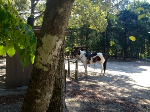Lunch stop at Sorghum Hollow Nat'l Forest Horse Camp (primitive sites)