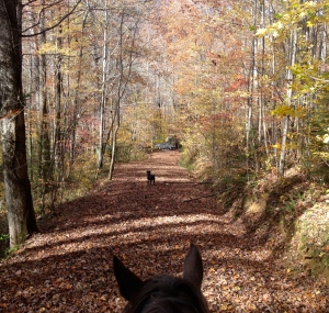 Black lab followed (or led) us on our trail ride to the river