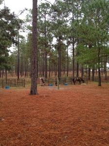 H Cooper Black campsite horse corrals