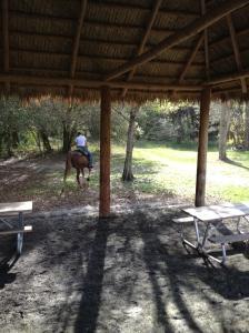 grass hut picnic area for equestrians