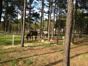 horses in the portable electric corral