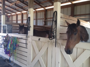 "my ""polo ponies"""