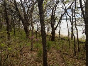 woods along the lake