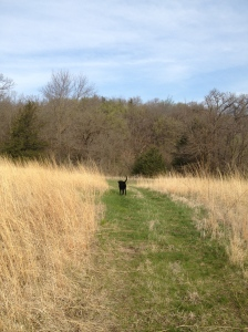 mowed path around the prairie, Tommy looking for more ticks