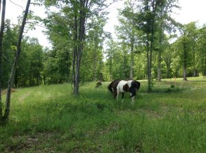 loose in camp grazing