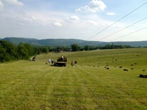 picking up hay bales in the field