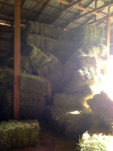 if you don't stack hay right...it falls down