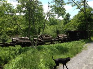 old logging town rail cars