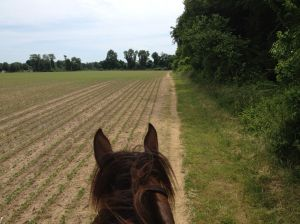the horse trail follows fields sometimes, good for a run