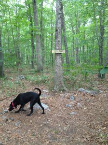 Appalacian trail