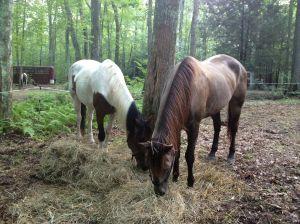 my mares