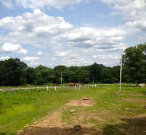 the gelding field