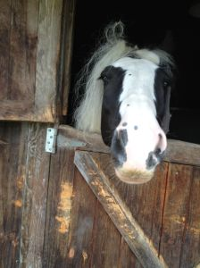 Gypsy horse at our overnight