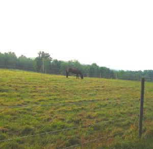 Dreamy in the pasture