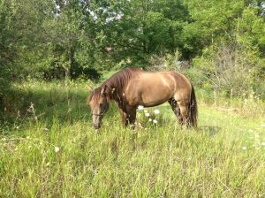 Dreamy prefers the tall grass