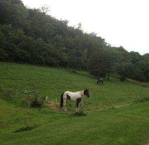 MN pastures