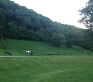 my mare's hillside pasture