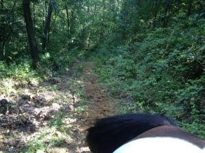 tail view of the man from snowy river trail (it is steep and long but its not a cliff)